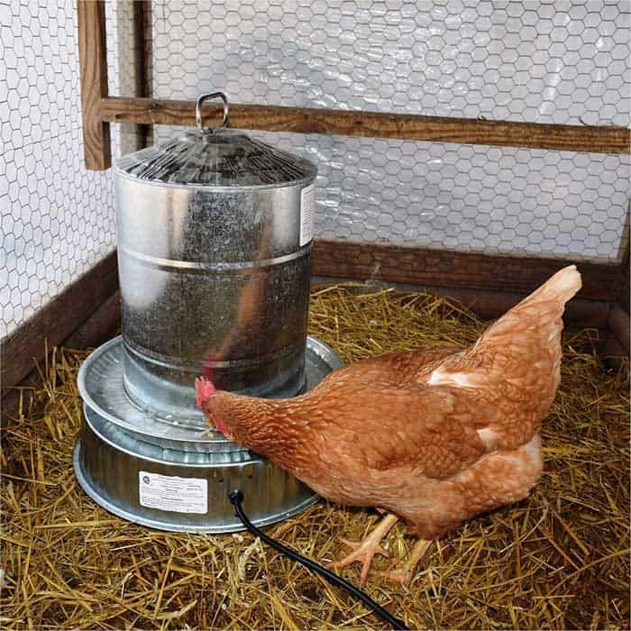Chicken waterer